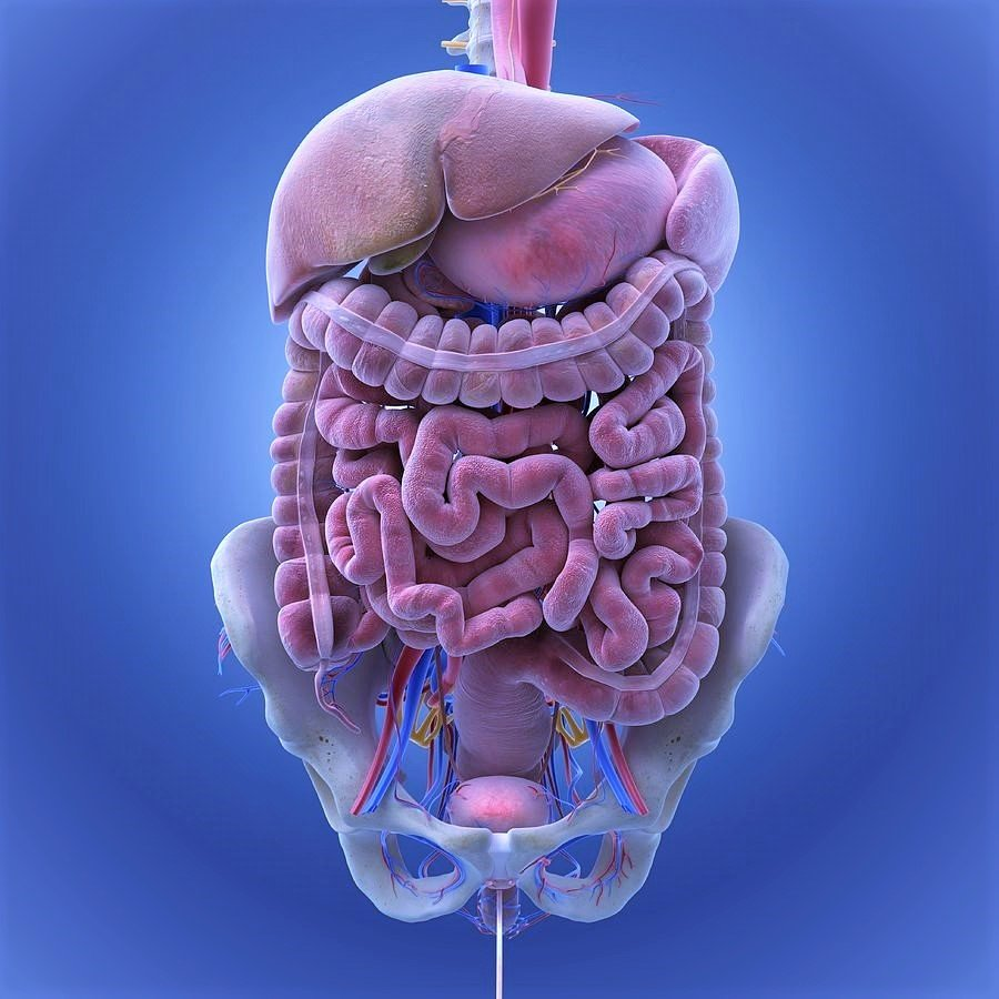 Crohn's disease, symptoms, causes and treatment by [Taj Life Sciences Mumbai]